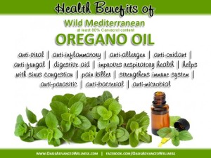 oregano-oil-health-benefits-335942_650x488
